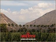 photo de palmeraie hacienda santa teresa