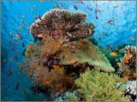 photo de fond sous marin ile maurice