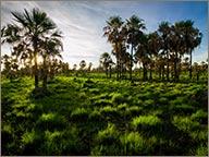 photo de cocotiers au paraguay